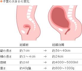 子宮の大きさの変化